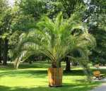 Chopin Park - the palm - Gliwice pictures